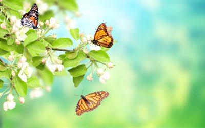 Kako nastaje leptir